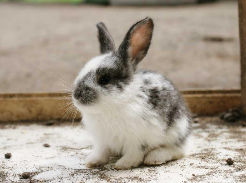 姥姥家可爱的小兔子-临泉论坛-手机临泉在线