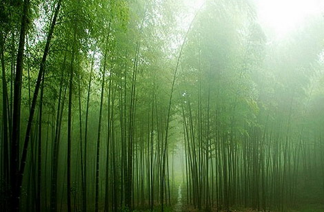 风琳听雨风景图片