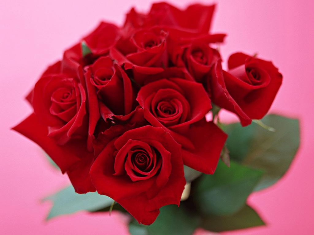 [歌曲接龙](十五)可爱的一朵玫瑰花