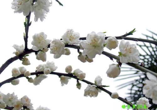 春天的花衣裳 原创摄影