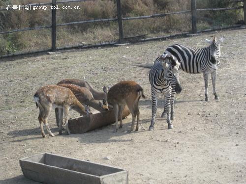 沈阳植物园/棋盘山森林野生动物园
