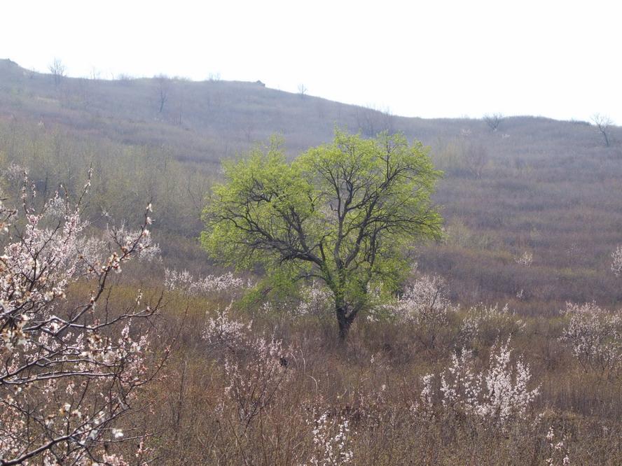 平泉榆树林子踏春08,04