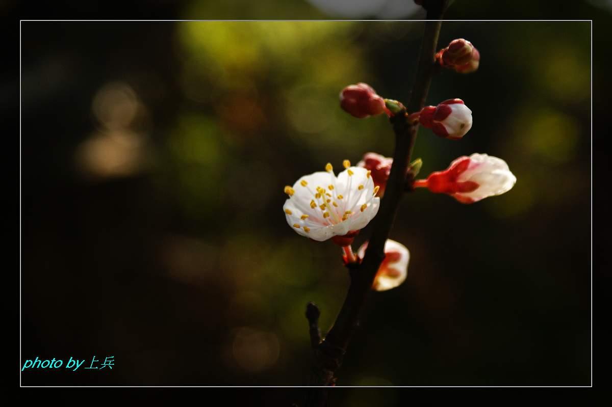 主题: [原创]春天来了!(一)