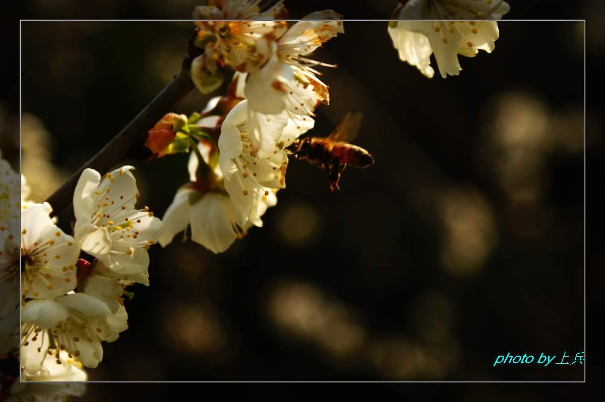 [原创]春天来了!(一)_摄影天地