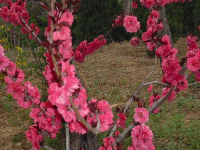 春天景色美---森林公园