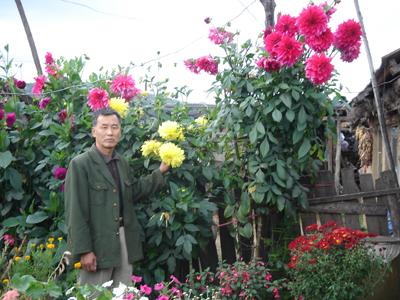 开花时花朵硕大艳丽,宜养植,深受爱花人的喜爱.