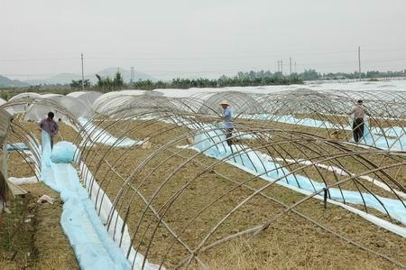 汕尾市完成冬种农作物