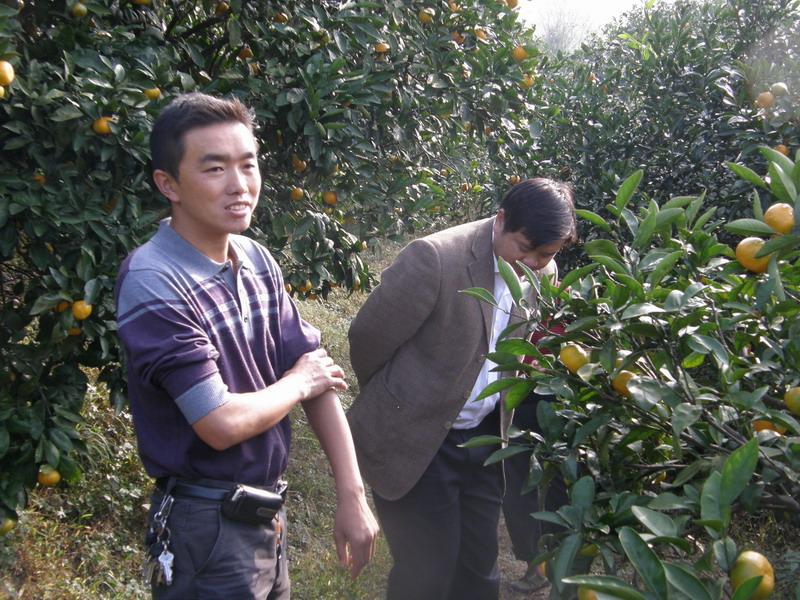 学校下一步将对桔园品种进行改良,增加种植多种果树.